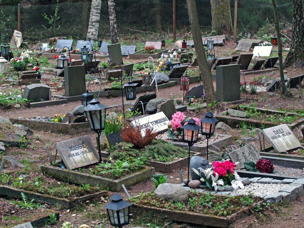 Den Rhodesian Ridgeback auf dem Tierfriedhof begraben.