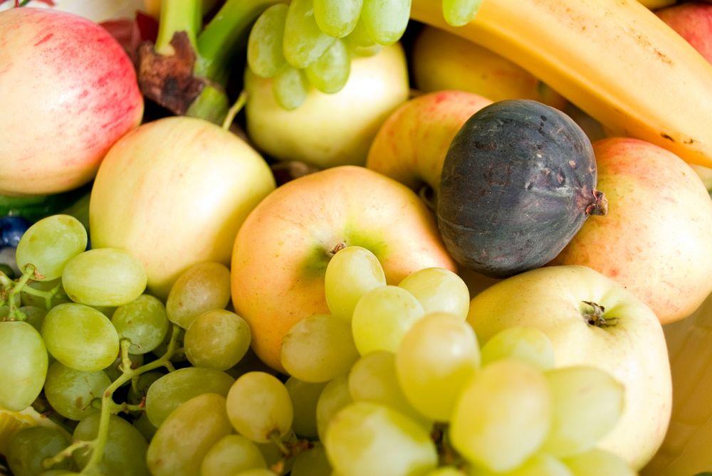 Obst für den Rhodesian Ridgeback