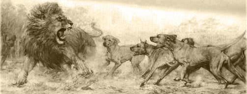 Rhodesian Ridgeback mit Löwen