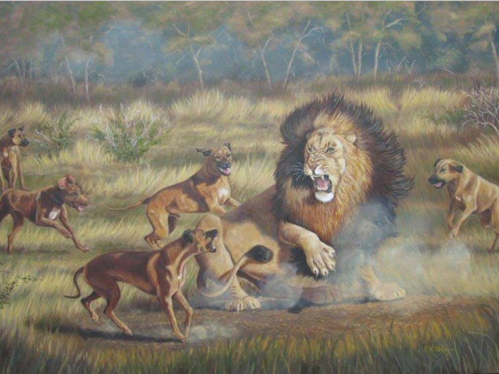 Ursprung Rhodesian Ridgeback