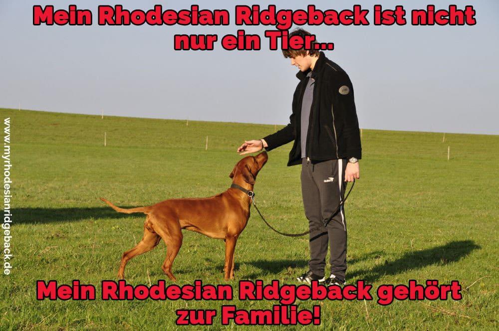 Ein Mann streichelt seinen Rhodesian Ridgeback
