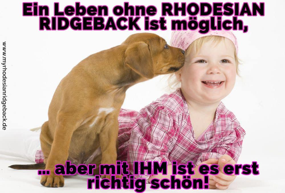 Ein Rhodesian Ridgeback leckt ein Baby